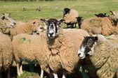Mixed Herd — Stock Photo