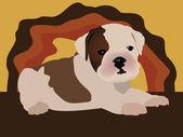 Cute puppy - english bulldog vector — Stock Vector