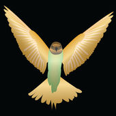 Colibri bird isolated on black — Stockvektor