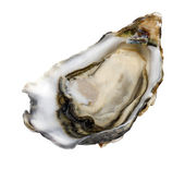 Single oyster on white — Stock Photo