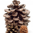 Three pine cones — Stock Photo