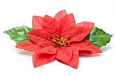 Fake poinsettia with two leaves top view — Stock Photo