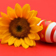 Foto Stock: Easter egg and sunflower