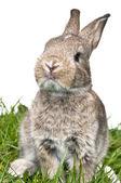 Bunny tittar mot kameran — Stockfoto