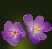 Sprężyny purpurowe kwiaty z zielonych liści koniczyny — Wektor stockowy