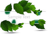 Green leaves on white background — Stock Vector