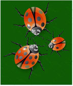 Ladybug, green leaves — Stock Vector