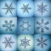 Collection of snowflakes natural macro — Stock Photo