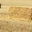 Bales of straw — Stock Photo #8951978