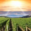 Sunset over a vineyard — Stock Photo #9045369