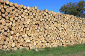 A Wood — Stock Photo