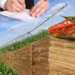 Layout for agriculture — Stock Photo #9122709
