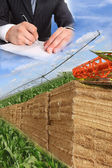 Layout for agriculture — Stock Photo