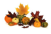 Autumn still-life — Stock Photo