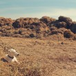Dog on a hay — Stock Photo