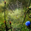 Cobweb - Stock Photo