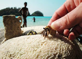 Touch to nature. Crayfish and corals not far from Ko Chang island — Stock Photo