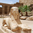 Statue is similar to the statue of the Sphinx — Stock Photo #8890421