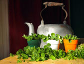 Irish Flower Pot Shamrocks — Stock Photo