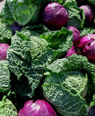 Purple and Green Cabbages — Stock Photo