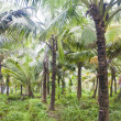 Palm forest in Backwaters — Stock Photo