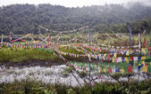 Buddhist flags at sacred lake — Stock Photo