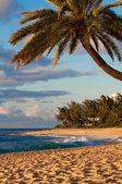 Palmeras playa puesta del sol — Foto de Stock