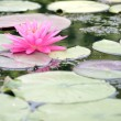 Lotus in lake — Stock Photo #10222121