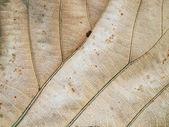 Patterns on the leaves shriveled — Stock Photo