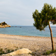 Pine Tree on the Rocky Beach in Brela, Croatia — Stock Photo