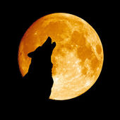 Wolf howling at the moon — Stock fotografie