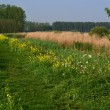 Stock Photo: Dike in springtime.