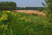 Haga un dique en la primavera. — Foto de Stock