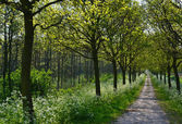 Oaks in the springtime. — Stock Photo