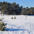 Snow on the Kootwijkerzand. — Stock Photo