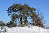 Snow on the Kootwijkerzand. — Stock Photo
