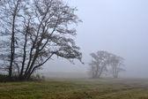 Alberi di punteruolo nella nebbia. — Foto Stock