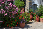 Plant pots with flowers in Greece. — Stock Photo