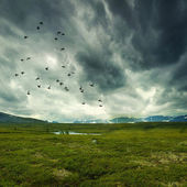 Wild nature with storm clouds — Stock Photo
