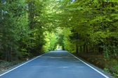 Stright way trought green forest in summer time — Stock Photo