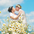Stock Photo: Bouquet of daisies