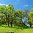Spring countryside — Stockfoto