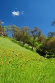 Paesaggio di primavera — Foto Stock