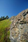 Mt Tamaplais Lizard — Stock Photo