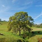 Spring countryside — Stock Photo