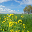 Spring countryside — Stock Photo