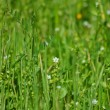 Springtime meadow — Stock Photo