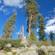 Mountain forest in spring — Stockfoto