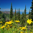 Mountain Meadow - Stock Photo
