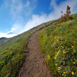 Trail in the mountains - Foto de Stock